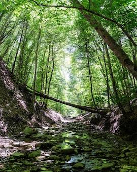 Pequeño río de montaña en bosque verde fresco en verano