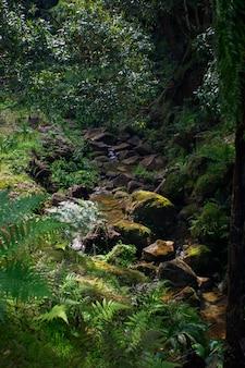 Pequeño río que fluye en un desfiladero, caldeira velha, isla sao miguel, azores, portugal