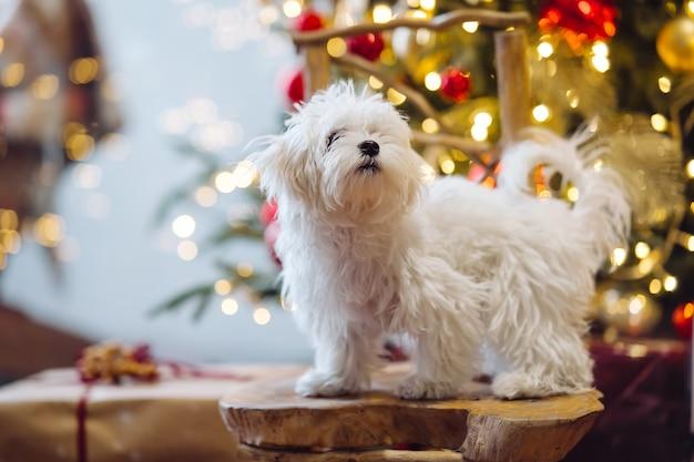 Pequeño terrier blanco en el fondo del árbol de navidad