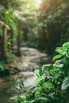 Pequeño tronco de río en la selva tropical.