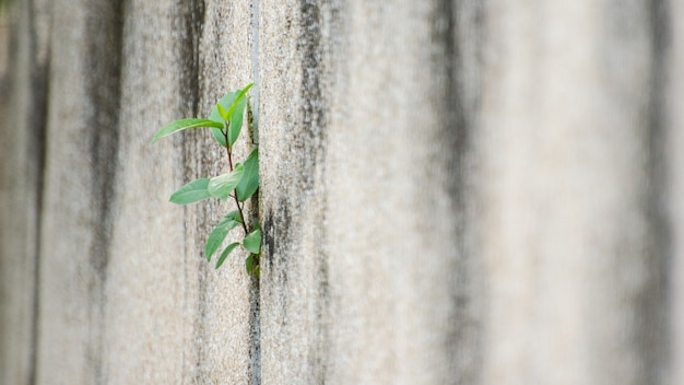 Pequeños árboles que crecen en muros de hormigón.