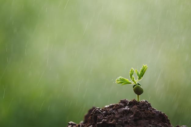 Pequeños brotes de café crecen a lo largo de la corriente de siembra. concepto de rse