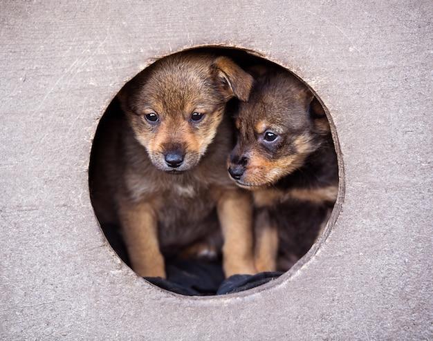 Pequeños cachorros lindos en la caseta del perro.