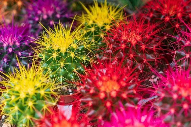 Pequeños cactus, flores, plantas ornamentales tropicales.