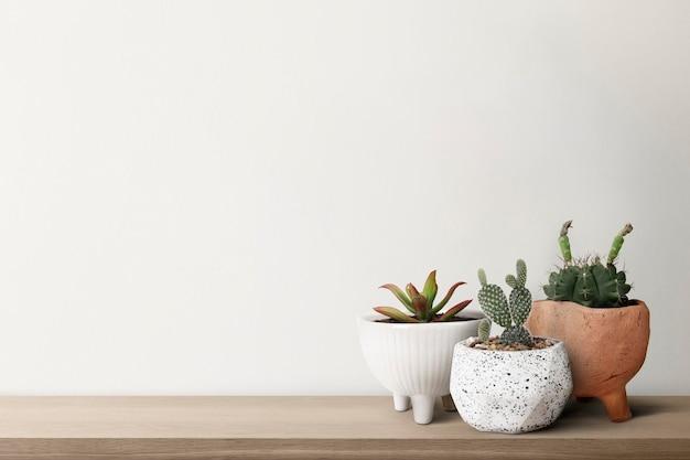 Pequeños cactus con un fondo de pared blanca