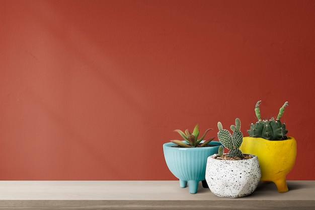Pequeños cactus con un fondo de pared roja