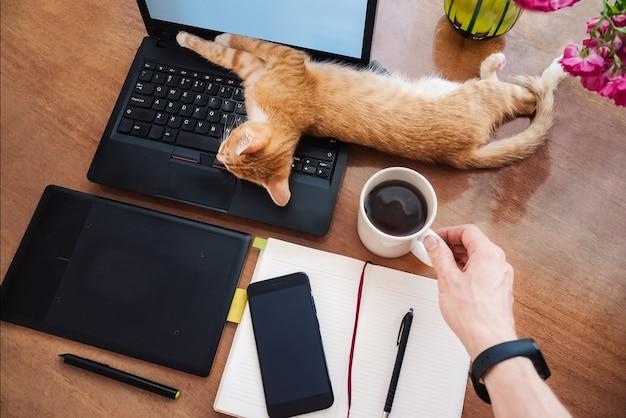 Perezoso trabajando en casa gracioso gato durmiendo en la mesa de trabajo