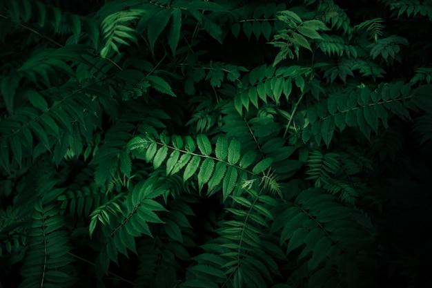 Perfecto hojas naturales patrón hermoso tropical