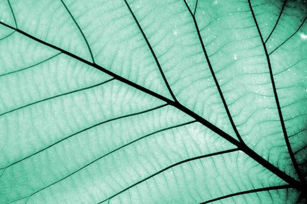 Perfectos patrones de hojas azules - primer plano