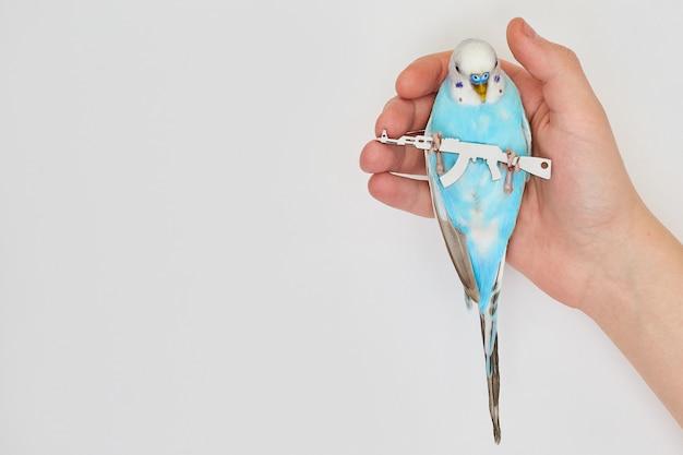 Un periquito azul sostiene una ametralladora en sus patas. el concepto de publicidad social contra la guerra. seguridad.