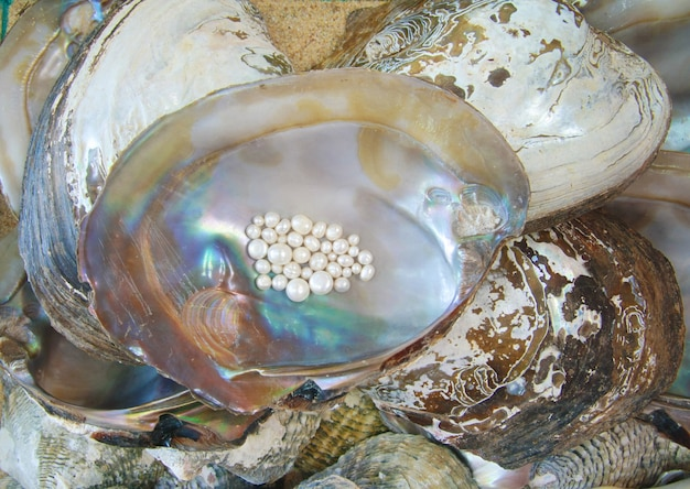 Perla con ostra