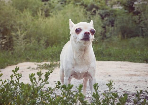 Perrito con ojos grandes.