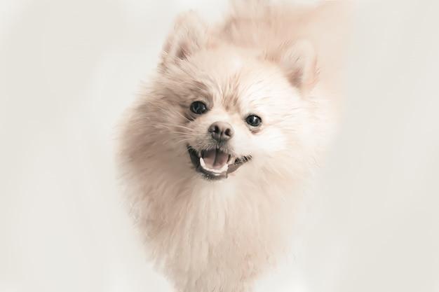 Perrito pomeranian poner crema sonriente aislado en el fondo blanco