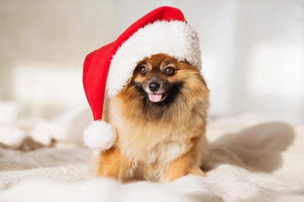 Perrito en sombrero rojo de santa