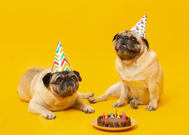 Perritos lindos celebrando un cumpleaños aislado en amarillo