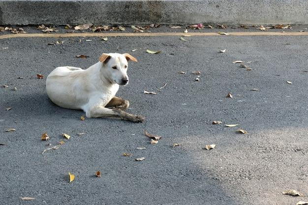 Perro abandonado sin hogar en la calle.