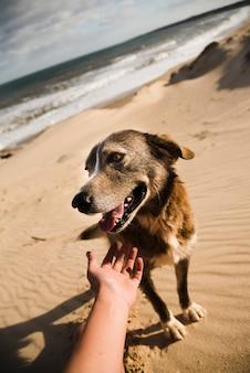 Perro acariciando en la playa