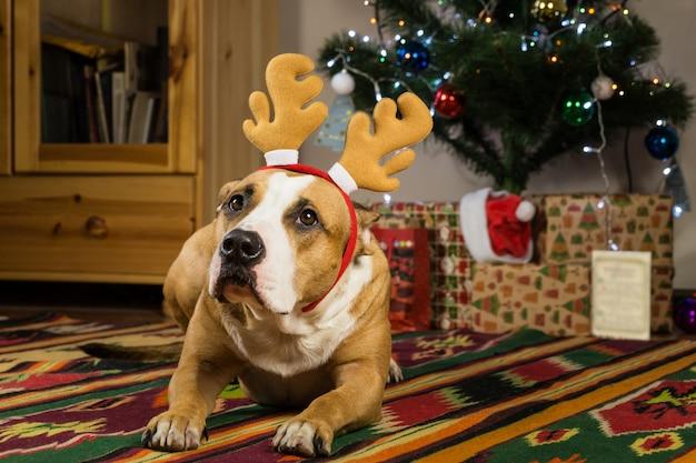 Perro en la acogedora sala de estar frente al árbol de pieles y regalos de año nuevo