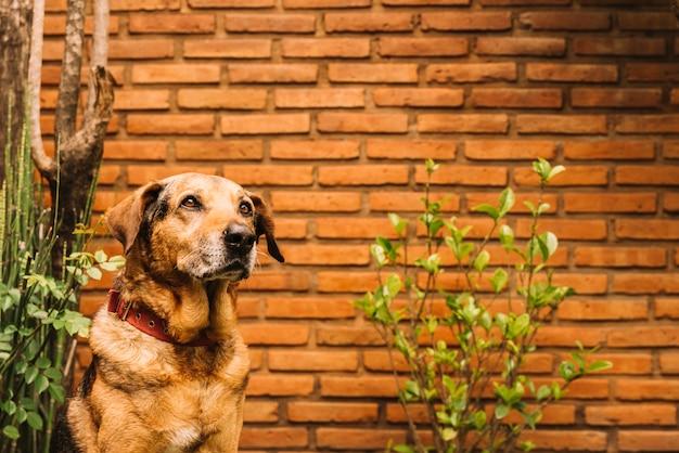 Perro adorable posando en el jardín