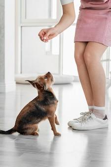 Perro de alimentación de mano de primer plano
