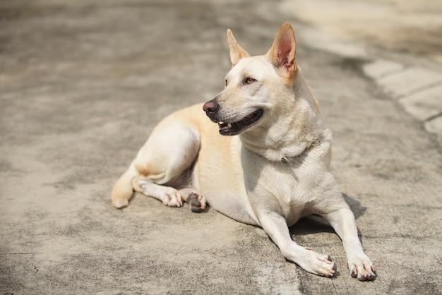 Perro amarillo joven esperando y sentado en la calle