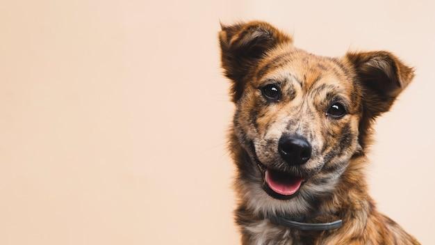 Perro amigable con espacio de copia de lengua afuera