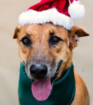 Perro amigo lindo canino sonriente