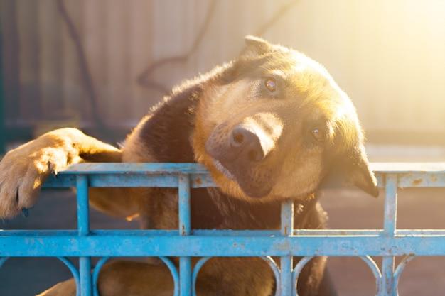 Perro apoyó la cabeza en la cerca y esperó a su dueño.