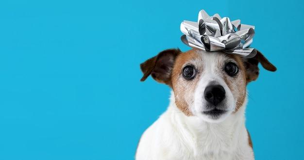 Perro con un arco en la cabeza.