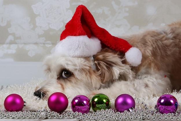 Perro aying en la manta en el interior con adornos navideños