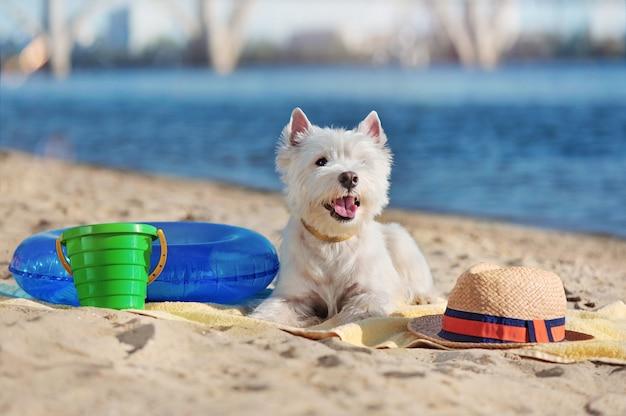 Perro blanco acostado en la playa de arena con juguetes
