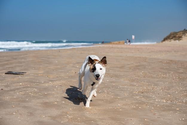 Perro blanco corriendo por una playa rodeada por el mar bajo un cielo azul y la luz del sol