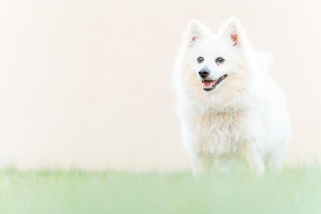 Perro blanco lindo en la hierba de la yarda