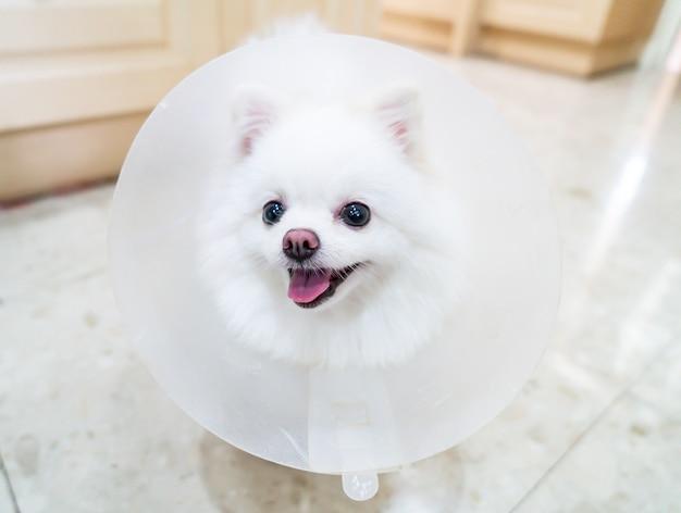 Maltes perro   Fotos y Vectores gratis
