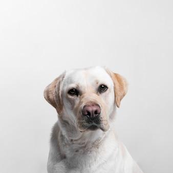 Perro blanco