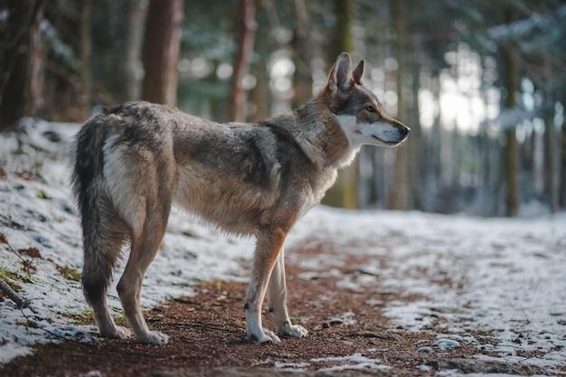 Perro en bosque de invierno