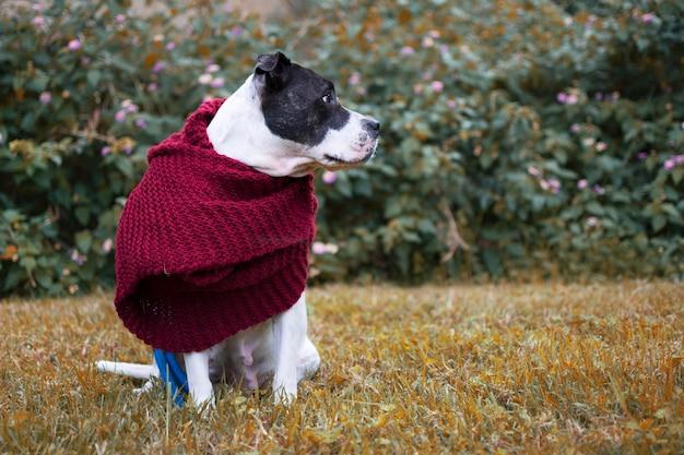 Perro con bufanda en la naturaleza otoñal. copyspace a la derecha.