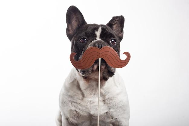Perro bulldog francés con bigote falso de papel aislado sobre fondo blanco.