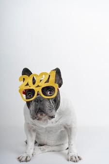 Perro bulldog francés celebrando el año nuevo 2021 con gafas de texto y confeti.