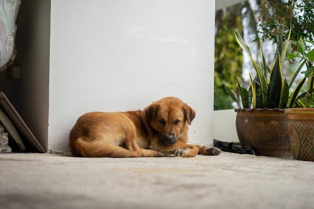 Perro de cabello castaño tirado en el suelo.