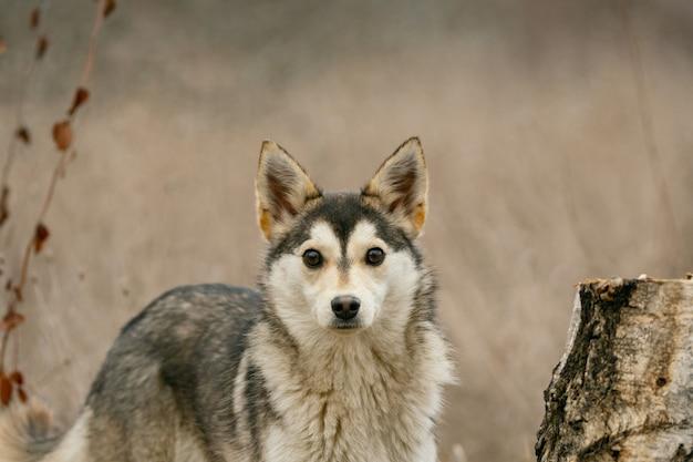 Un perro callejero en el bosque. de cerca.