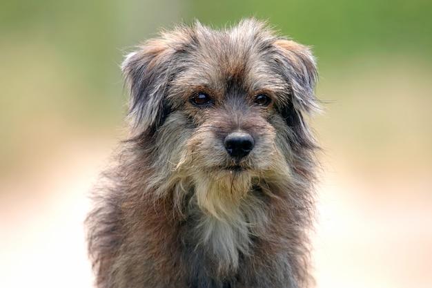 Perro callejero desordenado pelo