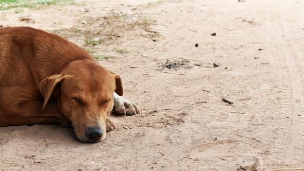 Perro callejero hambriento espera alguien da comida en tierra sucia