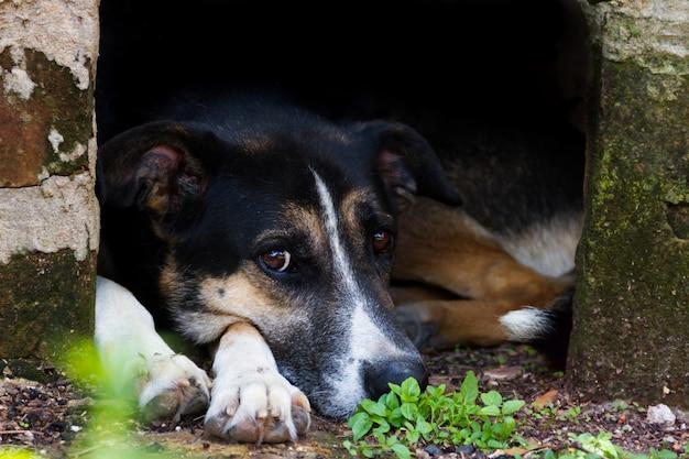 Perro callejero mestizo retrato sobre fondo oscuro