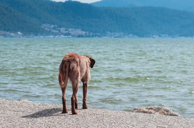 Perro callejero mirando el mar de verano