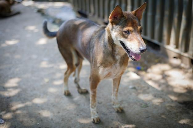 Un perro callejero, solo la vida esperando la comida. perro callejero abandonado sin hogar está tirado en la calle. pequeño perro abandonado triste en el sendero.
