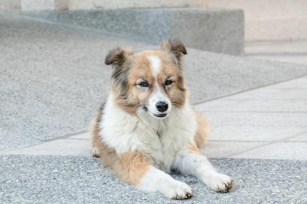 Perro callejero tirado en el suelo de la ciudad