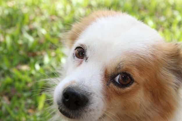 Perro callejero