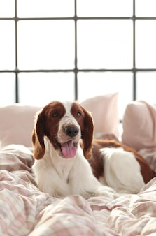 Perro en la cama por la mañana