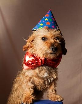 Perro celebrando año nuevo